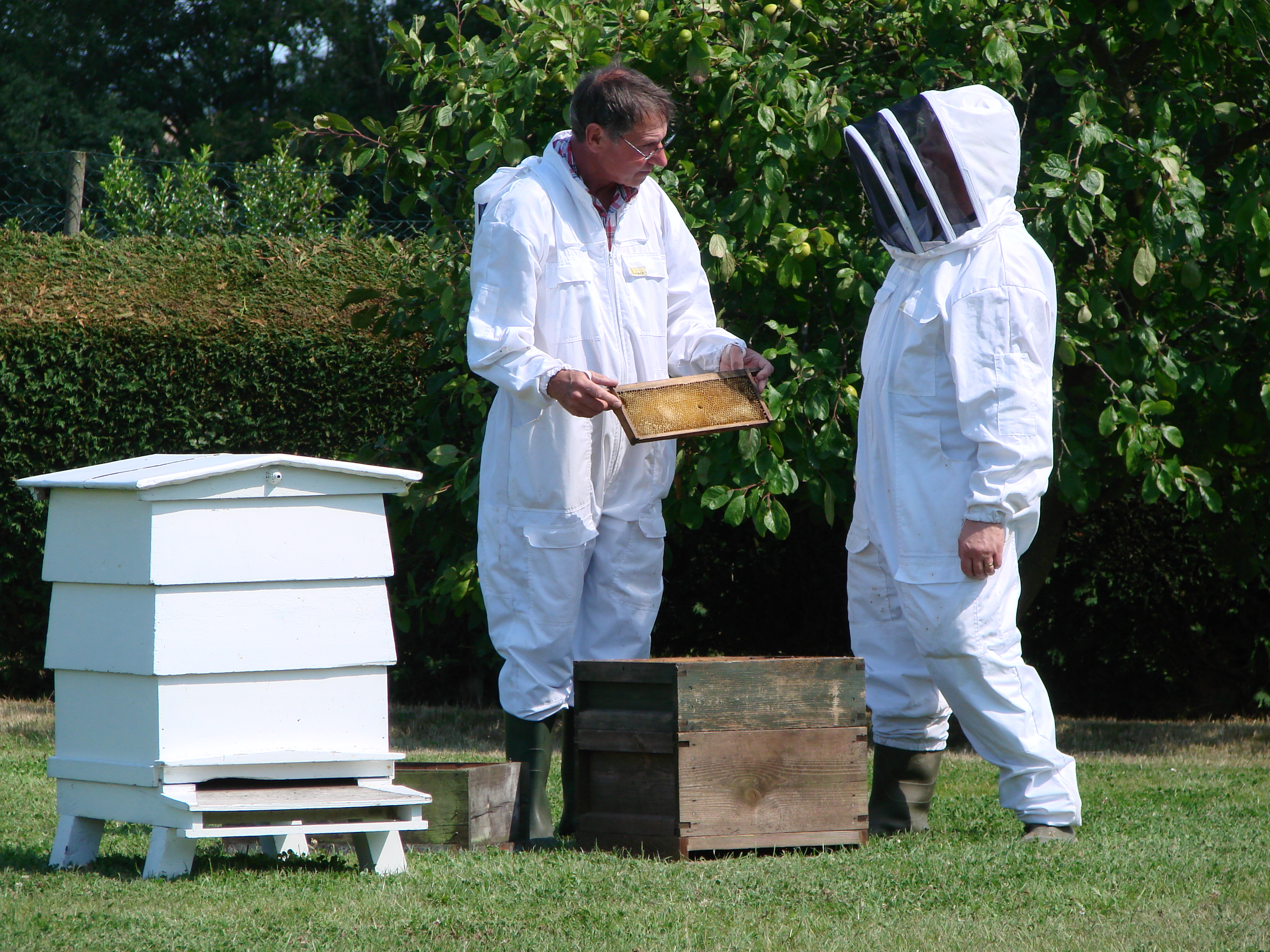 Bee Keeping Courses in South East England