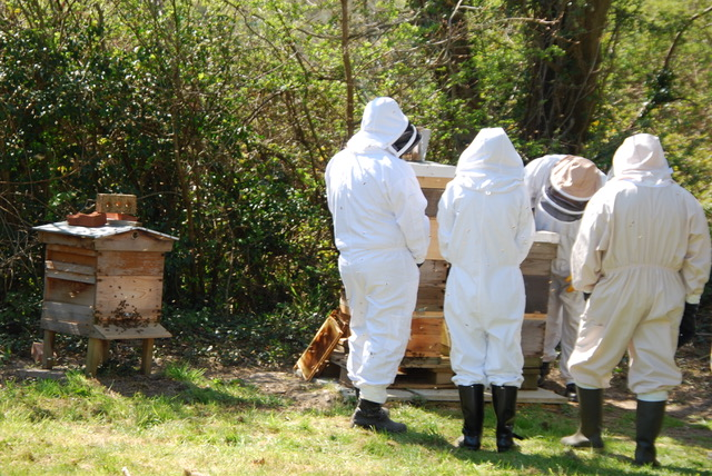 Bee Keeping Courses at Honey Bee World