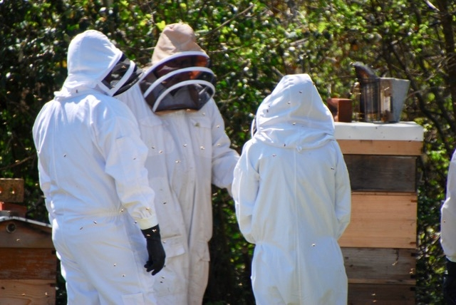 Bee Keeping Courses in Hawkhurst